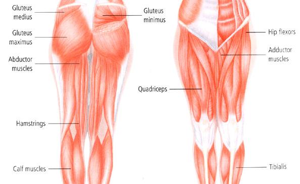 maigrir le bas du corps